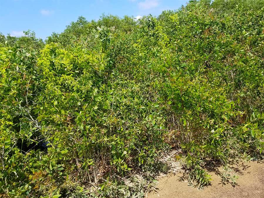 Dược liệu được Bảo Nhiên gieo trồng dưới hình thức gần với đời sống tự nhiên nhất